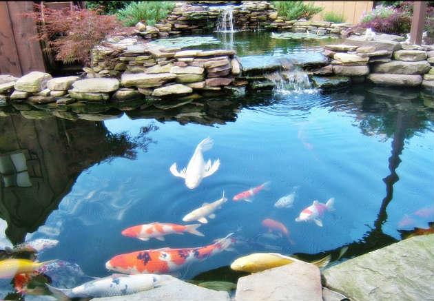 feng shui kolam ikan di belakang rumah