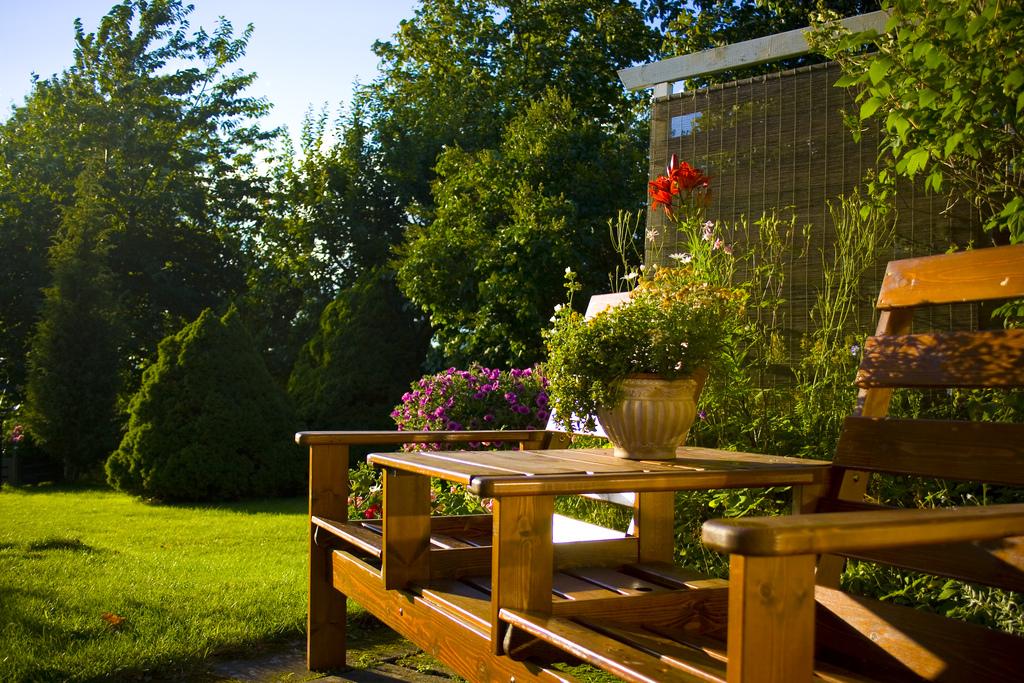 taman kecil di belakang rumah