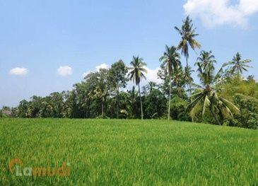 Jual Tanah untuk Investasi di Indonesia