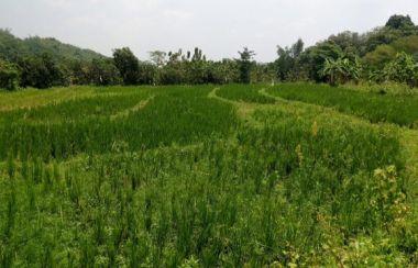 jual tanah di cirebon jawa barat