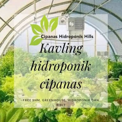 Kavling Produktif Hidroponik Free Greenhouse Cipanas Puncak
