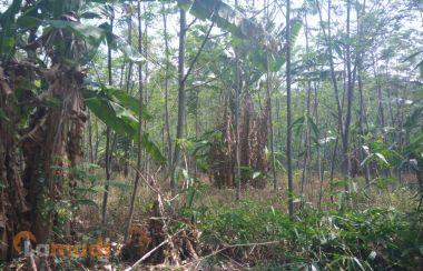 Tanah Murah Dijual di Jawa Tengah