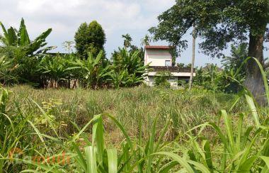 Pilihan Tanah Murah di Sumatera Utara
